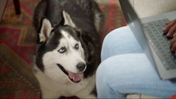 Wells Fargo TV Spot, 'Designer Dog Collar' - Thumbnail 6