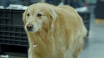 PetComfort Super Bowl 2019 Teaser, 'Scout: Taking Care of Business' - Thumbnail 1