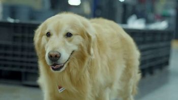 PetComfort Super Bowl 2019 Teaser, 'Scout: Taking Care of Business' - Thumbnail 2
