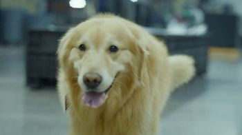 PetComfort Super Bowl 2019 Teaser, 'Scout: Taking Care of Business' - Thumbnail 4