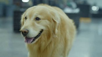 PetComfort Super Bowl 2019 Teaser, 'Scout: Taking Care of Business' - Thumbnail 5