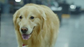 PetComfort Super Bowl 2019 Teaser, 'Scout: Taking Care of Business' - Thumbnail 6