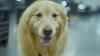 PetComfort Super Bowl 2019 Teaser, 'Scout: Taking Care of Business' - Thumbnail 7
