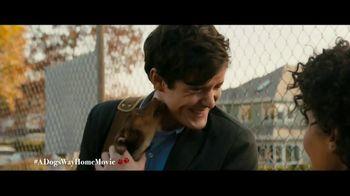 A Dog's Way Home - Alternate Trailer 35