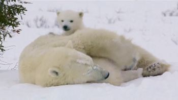 World Wildlife Fund TV Spot, 'Protect Life on Earth' - Thumbnail 9