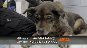 ASPCA TV Spot, 'In the Next Minute'