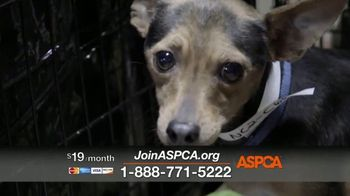 ASPCA TV Spot, 'In the Next Minute' - Thumbnail 3