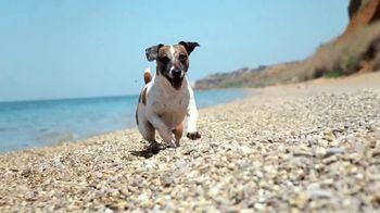 Royal Canin TV Spot, 'Animal Planet: Meet Max' - Thumbnail 1