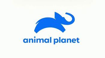 Royal Canin TV Spot, 'Animal Planet: Meet Max' - Thumbnail 9