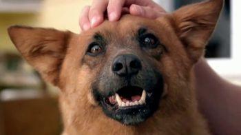 PETCO Foundation TV Spot, 'Pet Cancer' - Thumbnail 1