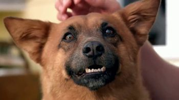 PETCO Foundation TV Spot, 'Pet Cancer' - Thumbnail 2
