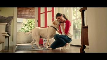 Cosequin TV Spot, 'Joint Health Supplements for Your Dog' - Thumbnail 8