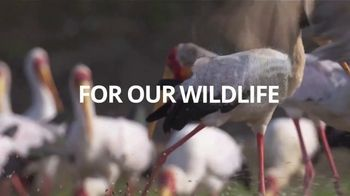 World Wildlife Fund TV Spot, '2019 Earth Hour' - Thumbnail 6