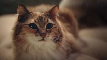 Clorox Ultra Clean Disinfecting Wipes TV Spot, 'Kitty Left a Gift' - Thumbnail 4