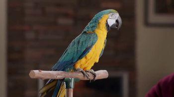 Discover Card TV Spot, 'Blabber Beak' - Thumbnail 5