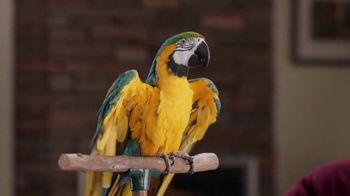 Discover Card TV Spot, 'Blabber Beak' - Thumbnail 7
