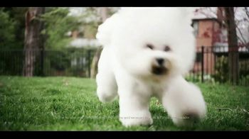 Purina Pro Plan Sport TV Spot, 'Westminster Best in Show' - Thumbnail 7