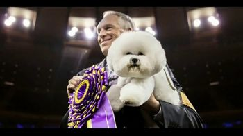 Purina Pro Plan Sport TV Spot, 'Westminster Best in Show' - Thumbnail 9