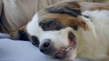 Freshpet Select TV Spot, 'Booba the 130-Pound Lap Dog' - Thumbnail 2