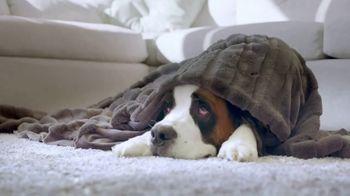 Freshpet Select TV Spot, 'Booba the 130-Pound Lap Dog' - Thumbnail 5