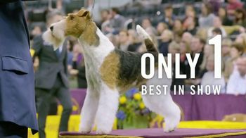 2019 Westminster Best in Show