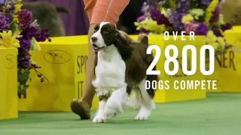 Purina Pro Plan TV Spot, '2019 Westminster Best in Show' - Thumbnail 2
