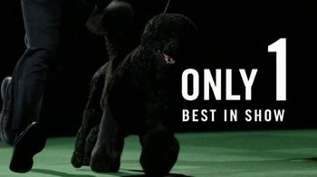 Purina Pro Plan TV Spot, '2019 Westminster Best in Show' - Thumbnail 3
