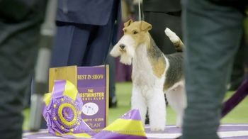 Purina Pro Plan TV Spot, '2019 Westminster Best in Show' - Thumbnail 7