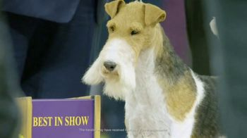 Purina Pro Plan TV Spot, '2019 Westminster Best in Show' - Thumbnail 8