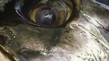 Yo-Zuri Fishing TV Spot, 'Pinpoint Accuracy' Featuring Carter Andrews - Thumbnail 3