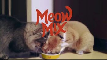 Meow Mix TV Spot, 'Litter Boxes and the Vault' - Thumbnail 9