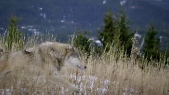 Blue Buffalo BLUE Wilderness TV Spot, 'Wolf Dreams: Meat-Rich'