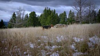 Blue Buffalo BLUE Wilderness TV Spot, 'Wolf Dreams: Meat-Rich' - Thumbnail 5
