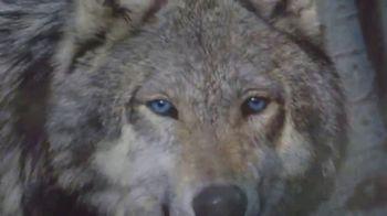 Blue Buffalo BLUE Wilderness TV Spot, 'Wolf Dreams: Meat-Rich' - Thumbnail 6