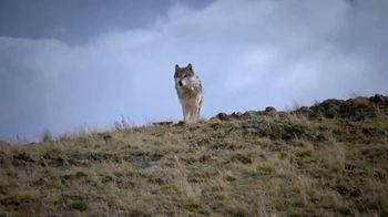 Blue Buffalo BLUE Wilderness TV Spot, 'Wolf Dreams: Meat-Rich' - Thumbnail 8