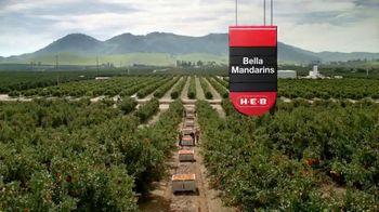 H-E-B TV Spot, 'SunWest Family Orchard: Bella Mandarins' - Thumbnail 9