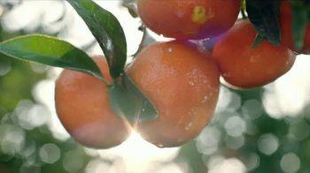 H-E-B TV Spot, 'SunWest Family Orchard: Bella Mandarins' - Thumbnail 5
