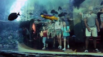 SeaWorld Fun Card TV Spot, 'Always Real. Always Amazing' - Thumbnail 9