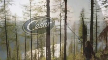 Cesar TV Spot, '2019 HGTV Dream Home' - Thumbnail 9