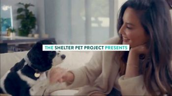 The Shelter Pet Project TV Spot, 'Adopt Pure Love: Olivia Munn' Song by Peggy Scott & Jo Jo Benson - Thumbnail 2