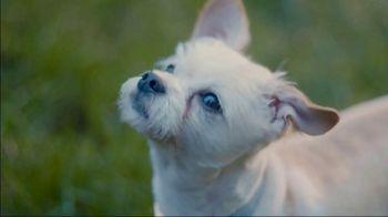 The Shelter Pet Project TV Spot, 'Adopt Pure Love: Olivia Munn' Song by Peggy Scott & Jo Jo Benson - Thumbnail 5