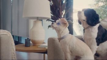 The Shelter Pet Project TV Spot, 'Adopt Pure Love: Olivia Munn' Song by Peggy Scott & Jo Jo Benson - Thumbnail 6