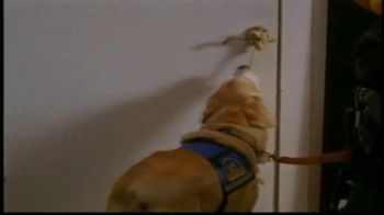 Canine Companions for Independence TV Spot, 'Tommy' - Thumbnail 4