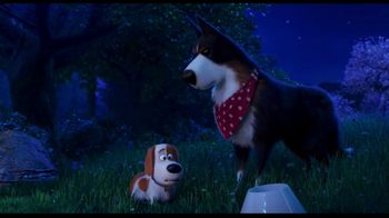 Clear the Shelters TV Spot, 'The Secret Life of Pets 2: Fund the Shelters Challenge' - Thumbnail 8