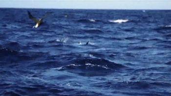 Shimano Stella SW TV Spot, 'Baja Sur' - Thumbnail 7