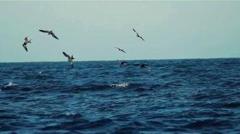 Shimano Stella SW TV Spot, 'Baja Sur' - Thumbnail 8
