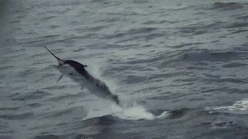 Shimano Stella SW TV Spot, 'Baja Sur' - Thumbnail 9