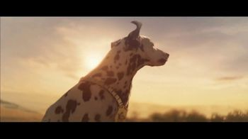Budweiser Super Bowl 2019 TV Spot, 'Wind Never Felt Better' Song by Bob Dylan - Thumbnail 3