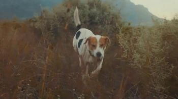2020 Range Rover Evoque TV Spot, 'A Dog's Dream' [T2] - Thumbnail 6