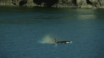 Clipper Vacations Seattle Whale Watching Day Trip TV Spot, 'Experience the Northwest' - Thumbnail 3